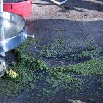 Grape skins left over after pressing