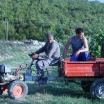 Harvest truck at Krolo Winery