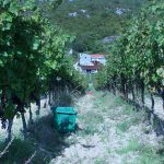 Krolo Family Estate and Winery